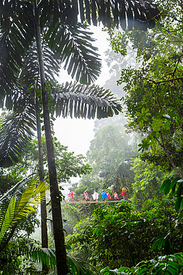 Tourists on rope bridge in rainforest - p312m1131445f by Lena Granefelt