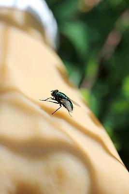 Fliege auf der Hand - p4500612 von Hanka Steidle