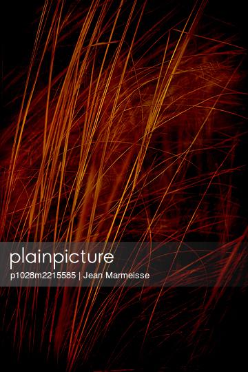 Vegetation - p1028m2215585 by Jean Marmeisse