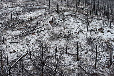 Forest Fire Remnants Covered in Snow, Colorado, USA - p694m785491 by James Gritz