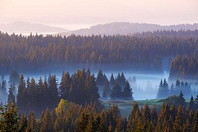 Montenegro, Durmitor National Park,forest in morning mist, view from Curevac - p300m2081285 by Martin Siepmann