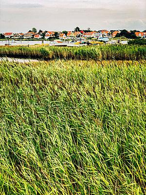 Small village by the sea - p382m2283974 by Anna Matzen