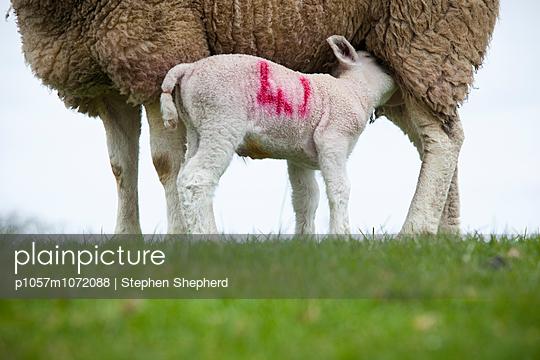 Tierhaltung, Cirencester - p1057m1072088 von Stephen Shepherd