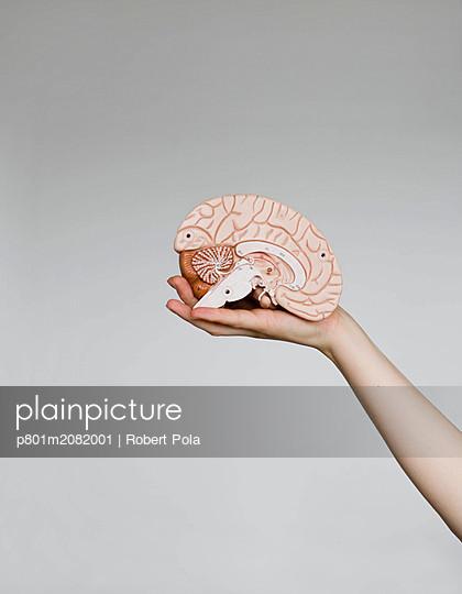 Gehirn - p801m2082001 von Robert Pola