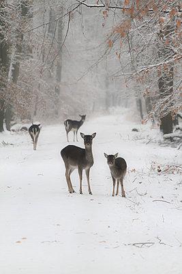 Hirsche im Stadtwald - p417m778721 von Pat Meise