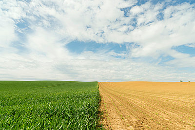 Border between crop fields - p429m664005 by Mischa Keijser