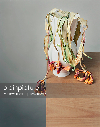 Withered cut flowers - p1012m2008051 by Frank Krems