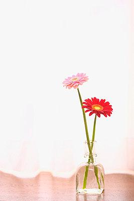 Gerbera Daisies in a vase - p5147700f by iplan