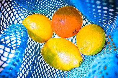 Citrus fruits - p1149m2284360 by Yvonne Röder