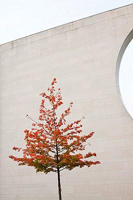 Baum vor Betonwand - p7950107 von JanJasperKlein