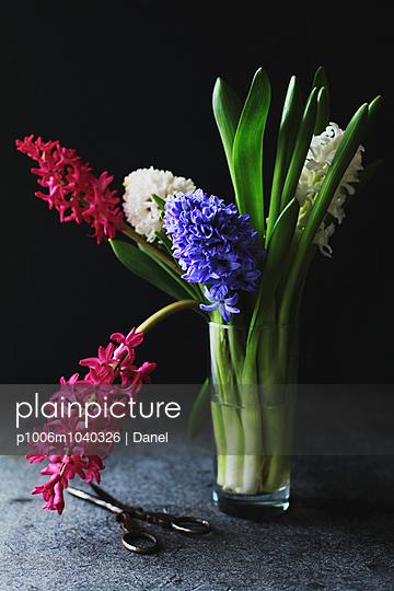 Hyacinth - p1006m1040326 by Danel