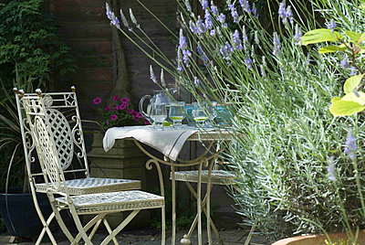 White ornamental metal garden furniture and water jug and glasses with flowering lavender - p349m790641 by Polly Eltes