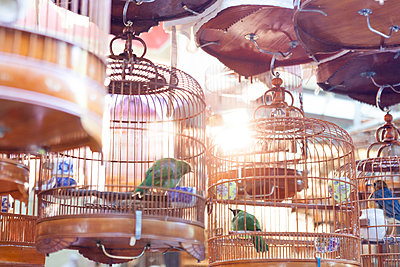 Birds in copper birdcages, Hong Kong, China, East Asia - p429m1569646 by Fang Zhou