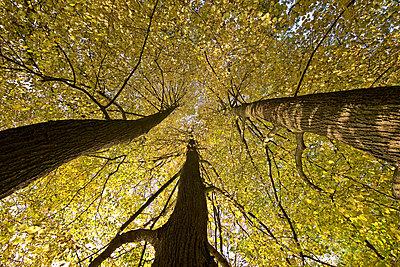 Drei Bäume - p792m2134330 von Nico Vincent