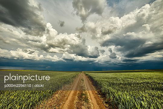 Storm clouds over dirt road cutting through vast green wheat field - p300m2294110 by oticki