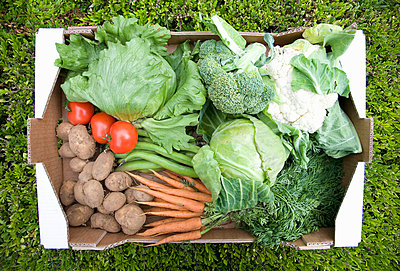 A basket of fresh vegetables - p42911275f by Ashley Jouhar
