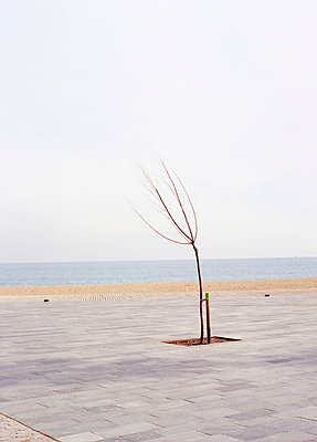 Planted Tree on a Seaside Promenade - p2686807 by Matthias Schmiedel