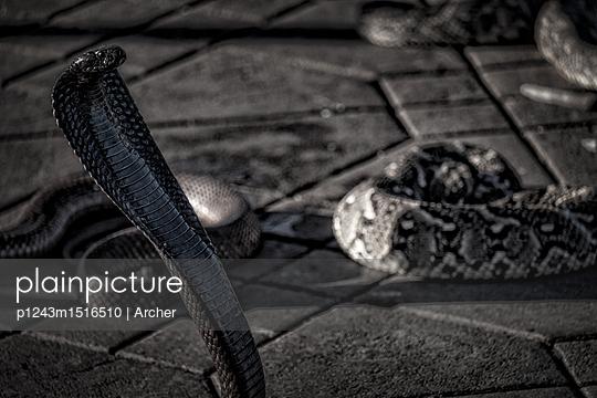 Schlangentanz in Marrakesch - p1243m1516510 von Archer