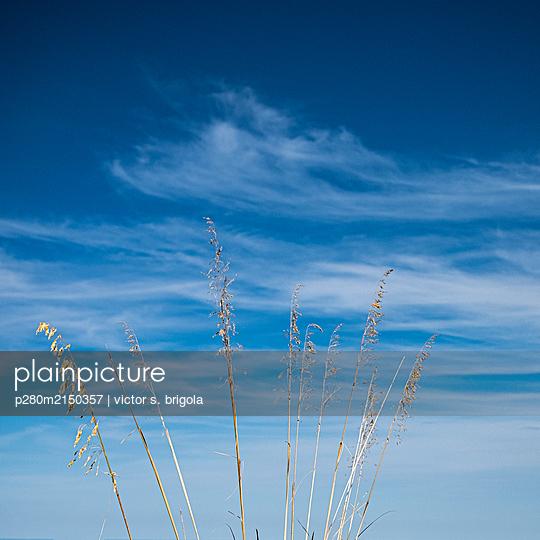 p280m2150357 by victor s. brigola