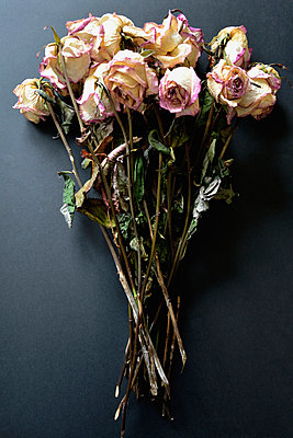 Withered bunch of roses on black ground - p300m1053044f by Axel Ganguin