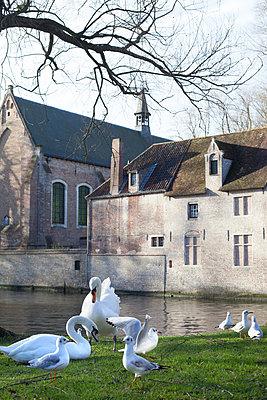 Bruges, Castle - p506m880389 by Julia Franklin Briggs