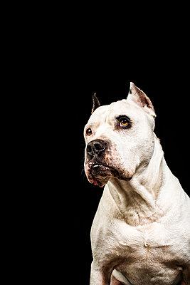 PET - p947m1087273 by Cristopher Civitillo