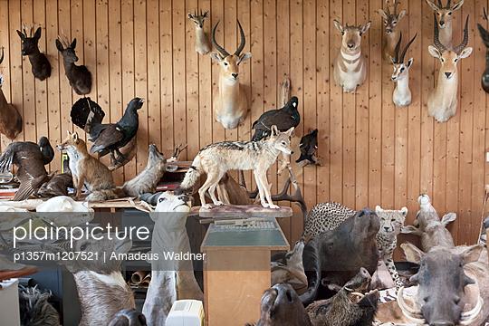 Tierpräparate - p1357m1207521 von Amadeus Waldner