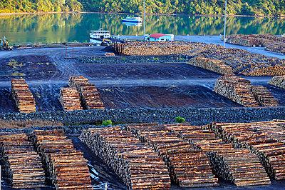 Lumberyard - p1395m1441413 by Tony Arruza
