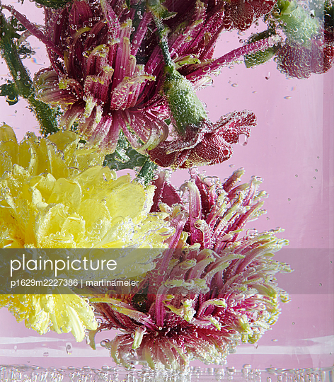 Frische Blumen - p1629m2227386 von martinameier