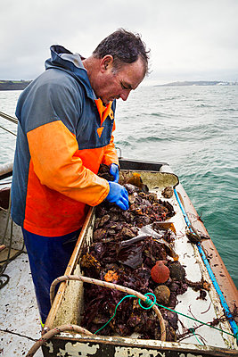 Traditional Sustainable Oyster Fishing. A man sorting oysters on a boat deck.  - p1100m1216019 by Mint Images