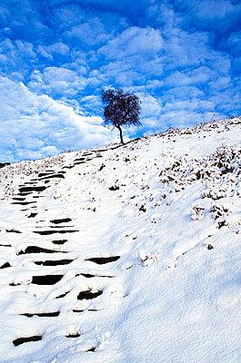 Snowy steps, Derbyshire, England - p4424783f by Design Pics