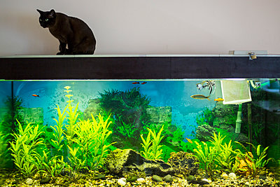 Fish and cat - p445m1177049 by Marie Docher