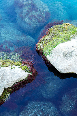 Algae on rocks - p7780058 by Denis Dalmasso