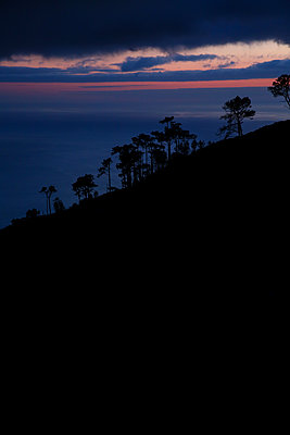 Silhouette von Bäumen im Morgenrot - p1643m2229407 von janice mersiovsky