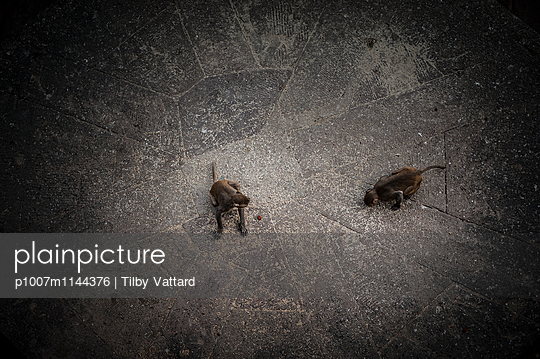 Two monkeys on the floor - p1007m1144376 by Tilby Vattard