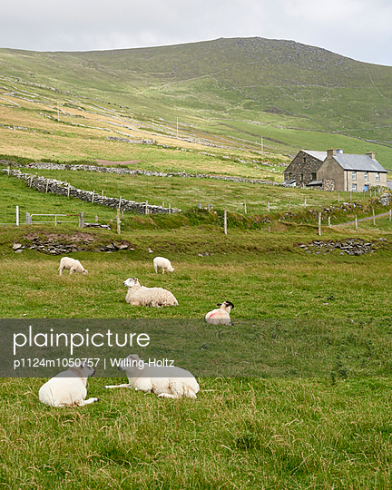 Dingle - p1124m1050757 by Willing-Holtz