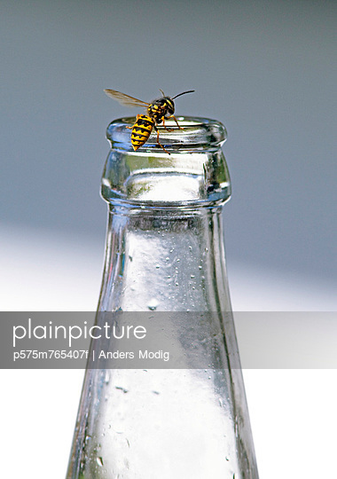 Wasp crawling on bottle - p575m765407f by Anders Modig