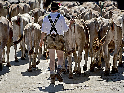 Mann in Tracht beim Viehscheid, Allgäu, Bayern, Deutschland - p1316m1161203 von Christoph Jorda