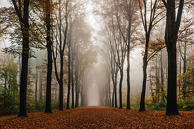 Forest road - p305m1091375 by Dirk Morla