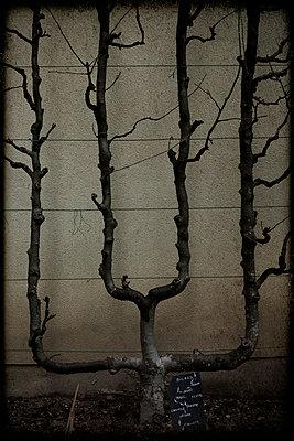 Garden in winter. - p1028m2055495 by Jean Marmeisse