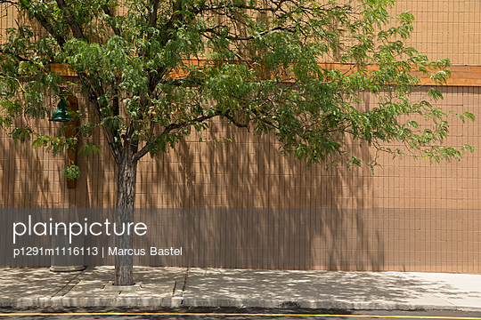 Tree at the Mall - p1291m1116113 by Marcus Bastel