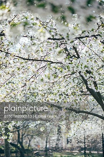 Spring  - p1507m2090113 by Emma Grann