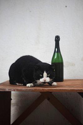 Katze - p0453069 von Jasmin Sander