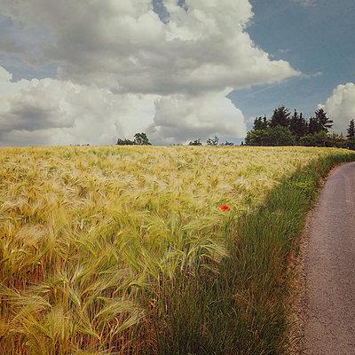 Barley Field - p1633m2208875 by Bernd Webler