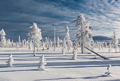 Landscape  - p1241m1481507 by Topi Ylä-Mononen