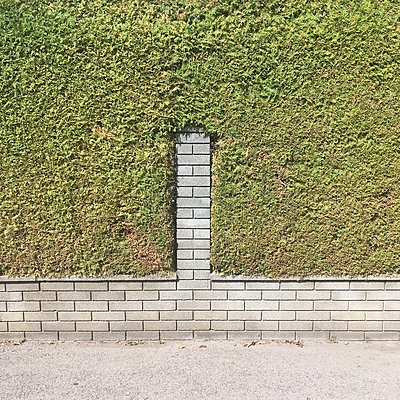 Brick wall and hedge - p1401m2122570 by Jens Goldbeck