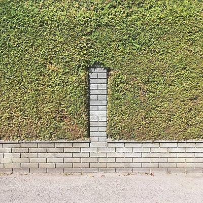 Ziegelmauer und Hecke - p1401m2122570 von Jens Goldbeck