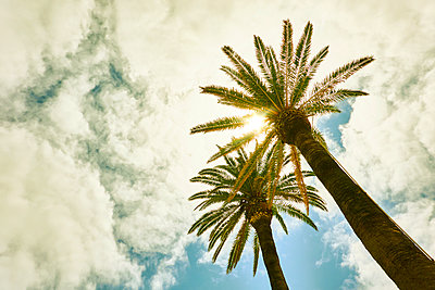 Palms against the light - p851m2110845 by Lohfink