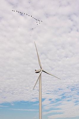 Vogelzug vorbei an einem Windrad - p1079m1137128 von Ulrich Mertens
