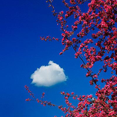 Fruit tree under blue sky - p8130102 by B.Jaubert